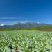 八ヶ岳とキャベツ畑_画像